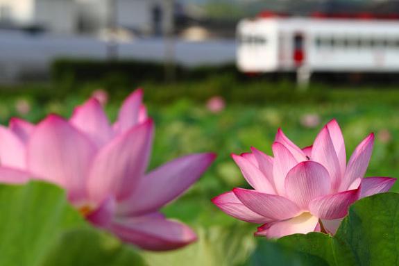 2010/7/25 和歌山電鐵貴志川線 甘露寺前