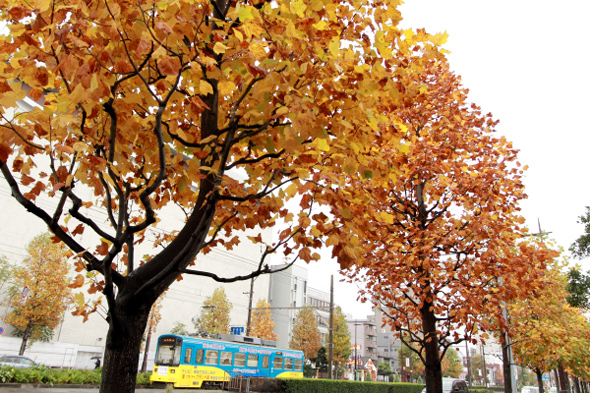 2012/11/11 阪堺電軌阪堺線 花田口