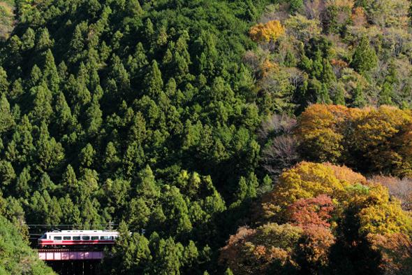 2012/11/25 南海高野線 上古沢~紀伊細川