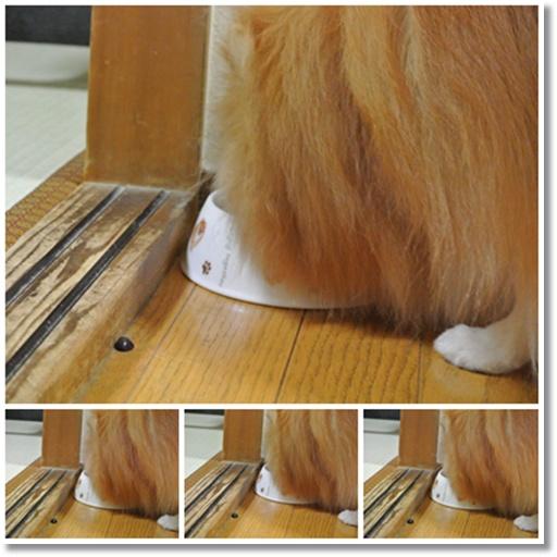 cats2_20131010213845580.jpg