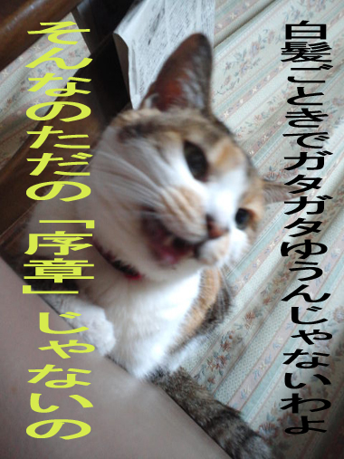 CA3J0041_20121022144427.jpg