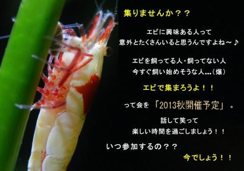 20130511213935a51.jpg
