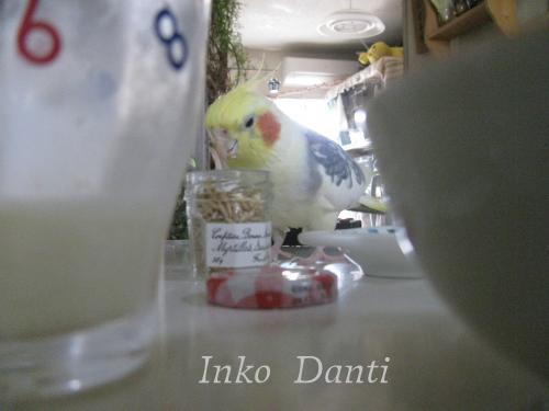 桃ちゃんとランチ2