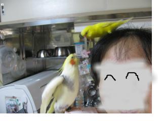 snap_piyopiyodaigaku_201273121330.jpg