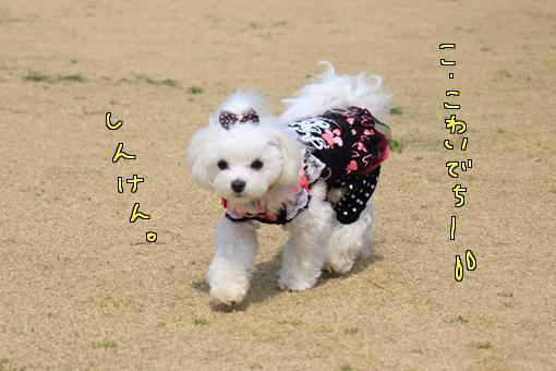 IMG_1471-1.jpg