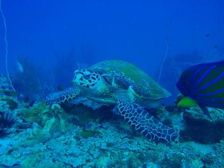 タオ島 ダイビング タイマイ