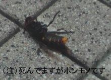 20130511-2.jpg