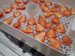 [写真]スライスした大粒紅ほっぺを食品乾燥機