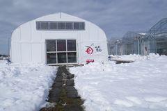 [写真]受付ハウスの入口通路の雪かきが終わったところ