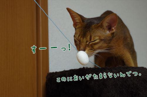 02_IMGP0373_RT.jpg