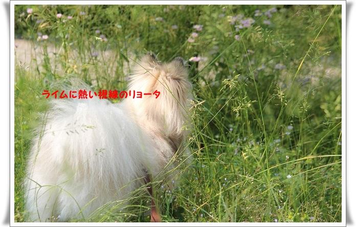028_20120604170015.jpg