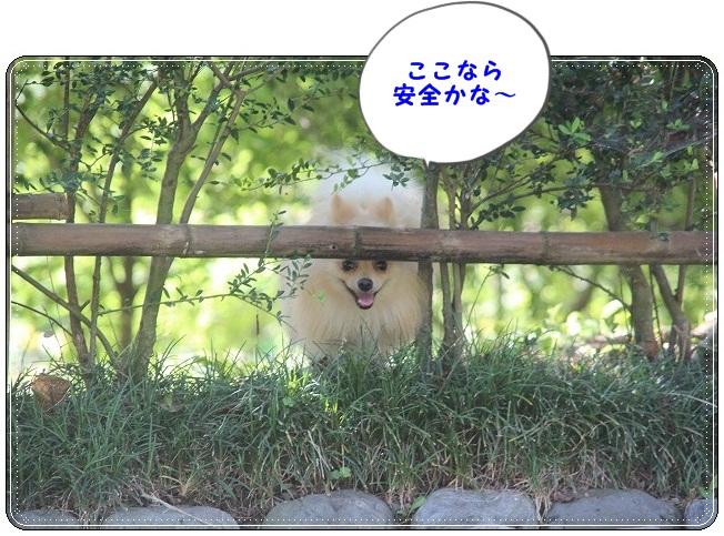 100_20120925150513.jpg
