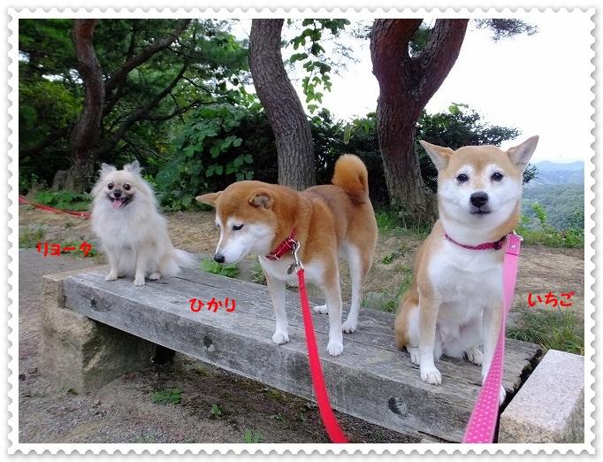 DSCF9385_20121001191208.jpg
