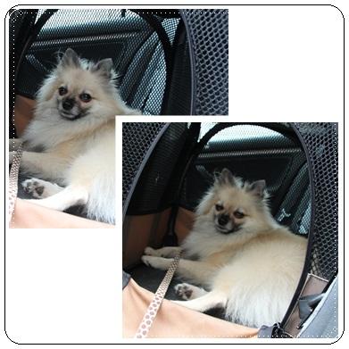 cats_20121017173713.jpg