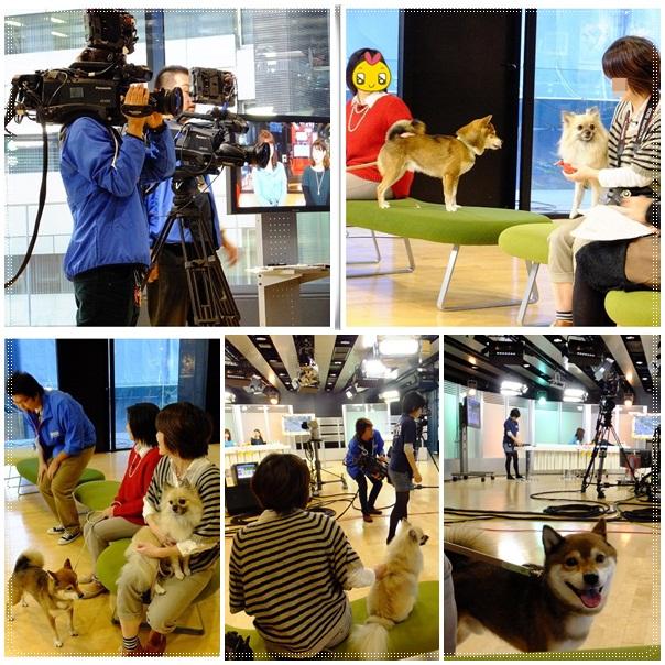 cats_20121026214303.jpg