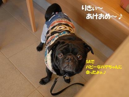 2月10~11日 伊豆パグ旅行 009