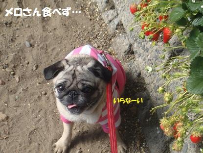 DSC00034_20130403040806.jpg