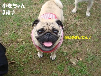 DSC00142_2014110303244483d.jpg
