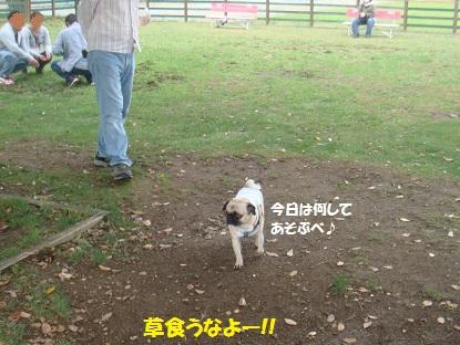 DSC00166_20141103032446ce4.jpg
