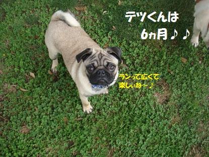DSC00207_2014110311572250b.jpg