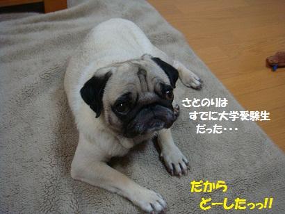 DSC00230_20110831005147.jpg