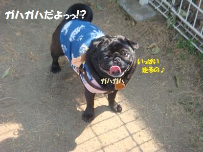 DSC00299_20130417194207.jpg