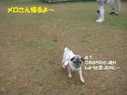 DSC00320_20141103145358acd.jpg