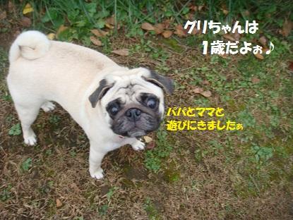 DSC00325_201411031432093eb.jpg