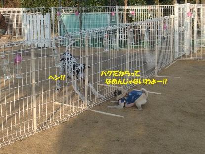 DSC00367_20130417192519.jpg