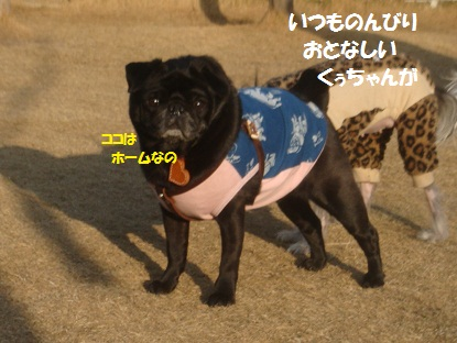 DSC00374_20130417194207.jpg
