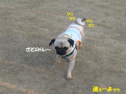 DSC00419_20130418013650.jpg