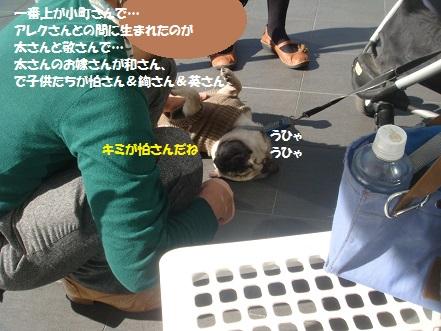 DSC00645_201411170306053a0.jpg