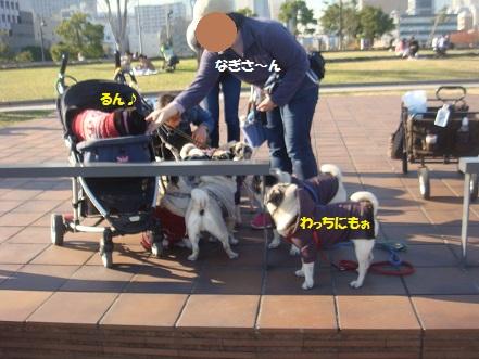 DSC00690_201411192055577fa.jpg