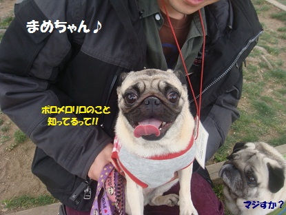 DSC00753_20130420233506.jpg