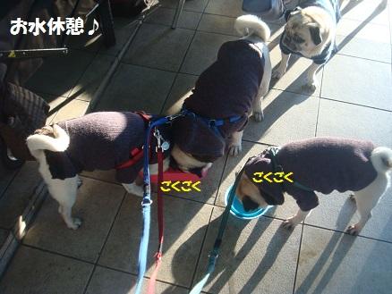 DSC00780_20141120043628ad7.jpg