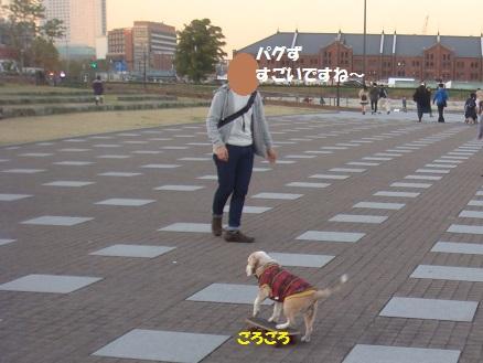 DSC00798_2014112004121769f.jpg