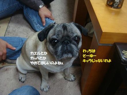 DSC01046_201411291910525a7.jpg