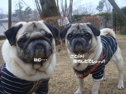 DSC01112_20130422200739.jpg