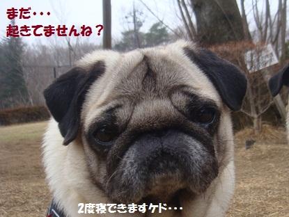 DSC01114_20130422200739.jpg