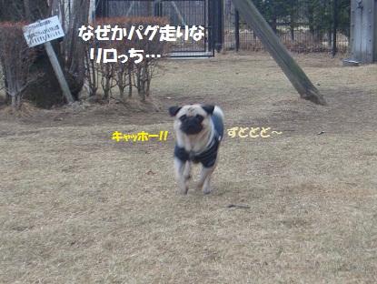 DSC01121_20130422200738.jpg