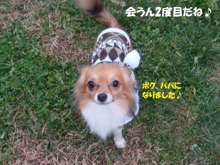 DSC01470_20141204030425177.jpg