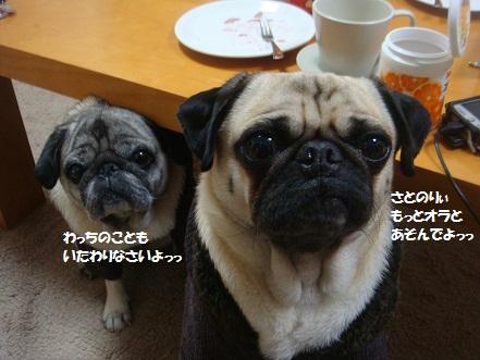 DSC01552_20141205042134e00.jpg