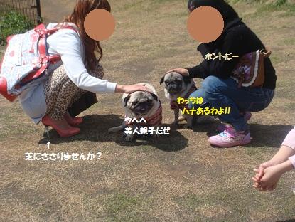 DSC01637_20130514194929.jpg