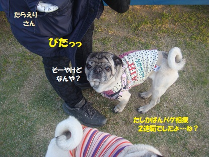 DSC01775_20130516033401.jpg
