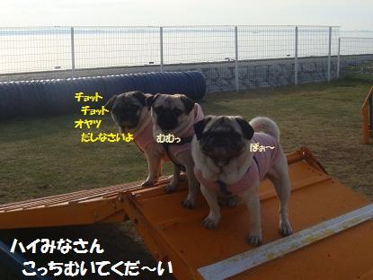 DSC01863_20130520191720.jpg