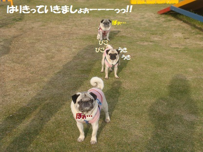 DSC01946_20130520190517.jpg