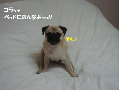 DSC02760_20130429201237.jpg