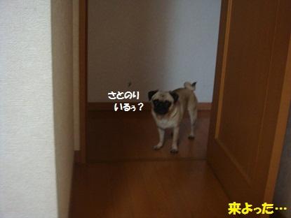 DSC02768_20130429201237.jpg