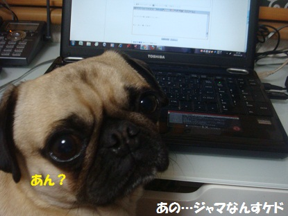 DSC02792.jpg