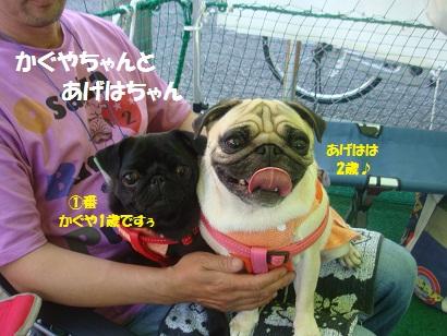 DSC04027_20130320215017.jpg